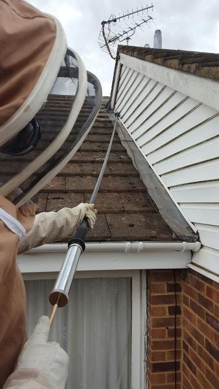 LK Pestaway, Wasp Nest Removal, High Wycombe, Buckinghamshire,