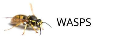 Pest wasp exterminator, south bucks, beaconsfield